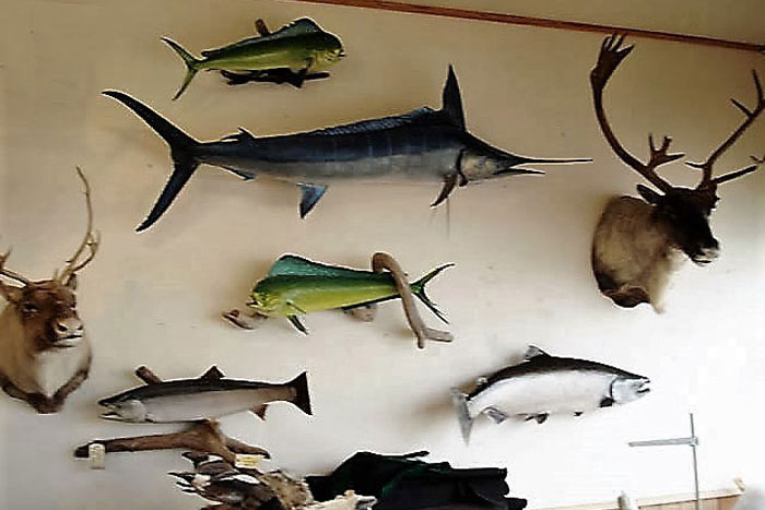 Bird and Fish Artistic Taxidermy